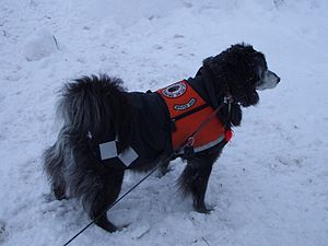 Suzi service dog snow 065
