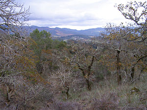 Yulupa Creek - Headwaters area of Yulupa Creek in the northern Sonoma Mountains with distant view of Mayacamas Mountains.