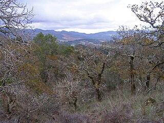 Yulupa Creek