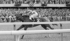 1973 Belmont Stakes - Secretariat on the final stretch