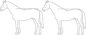 Back (horse) - The depth of a horse's topline may vary, from sway-backed to roach-backed.