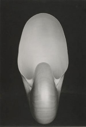 Edward Weston - ''Nautilus'' (1927) by Weston