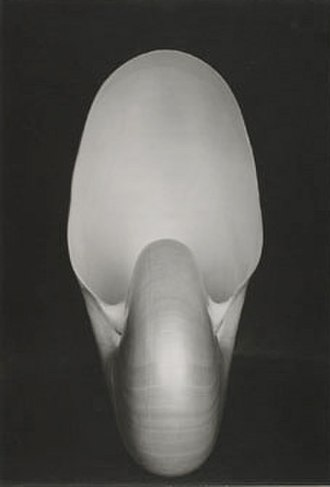 Edward Weston - Nautilus (1927) by Weston