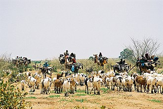 Hawazma tribe - This picture typical of Hawazma Baggara when reach North Kurdufan in their north journey out of the muddy land of South Kordofan