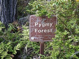 Dwarf forest - Trail signs at Salt Point alert hikers they are entering a Pygmy forested region