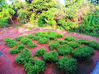 Shankarapura Village in Karnataka, India