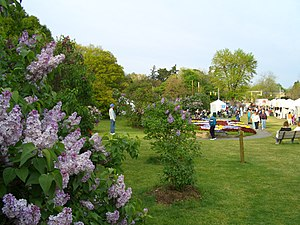 Image result for lilac festival