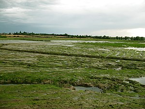 Managed retreat - Tollesbury Managed Realignment site in Essex, the first large scale attempt at salt marsh restoration in the UK