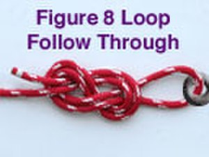 Figure-eight loop - A figure-of-eight loop tied using the follow-through method.