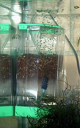 Filter aquarium wikipedia for Filtre aquarium rond