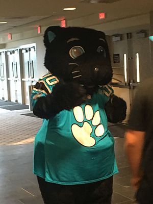 Sir Purr - Sir Purr at the 2016 Carolina Panthers Fan Fest