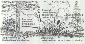 Fuel ladder - Illustration from U.S. government publication, Introduction to Wildland Fire Behavior (S-190), showing the fuel ladder