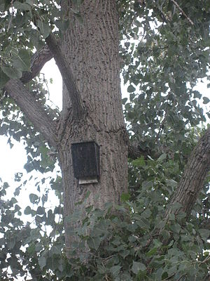 Nest box - A typical bat house affixed to a tree trunk