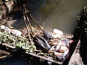 Litter floating in an irrigation canal
