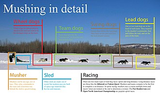 Mushing - Mushing graphics