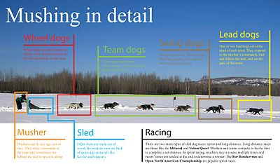 Photo graphic depicting the elements of a sled dog team