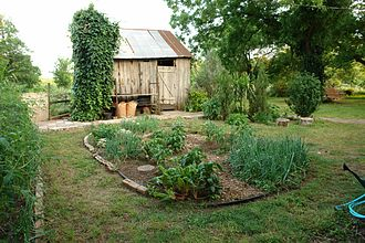 Kitchen garden - A small vegetable garden in May outside of Austin, Texas
