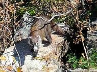 Quintana Roo Dog Rescue