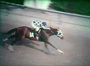 Secretariat (horse) - Secretariat at the Derby