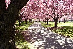 Brooklyn botanic garden wikipedia - Brooklyn botanical garden free admission ...