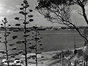 Rippleside, Victoria - Image: Rippleside geelong waterfront