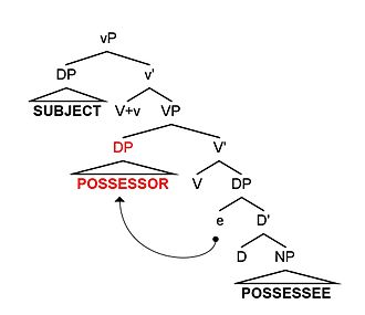 Inalienable possession - Possessor-raising from SpecDP to SpecVP