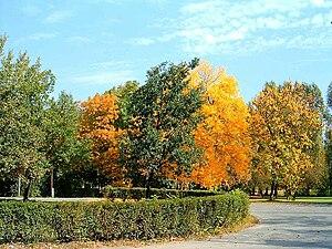 Hajógyári Island - Colourful trees in autumn, not far from the K-Bridge
