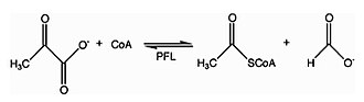 Formate C-acetyltransferase - Image: PFL reaction