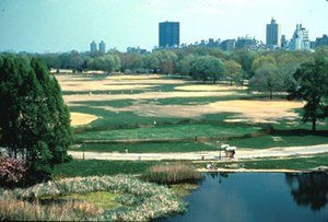 Central Park Conservancy - Image: Great lawn before 250