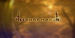 <i>Meerkat Manor</i> British television series about a meerkat family