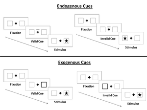 Posner cueing task - Endogenous and exogenous cues in the Posner Paradigm.