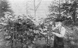 Concord grape - Ephraim Bull (1806–95), of Concord, Massachusetts, and the original Concord grape vine which he propagated and named in 1849.