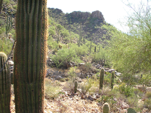 Photo shows a saguaro cactus in the foreground with desert vegetation and rugged terrain in the background.