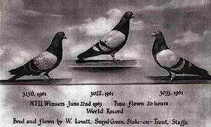 Tippler - Wilf Lovatt, 20:00, 1963