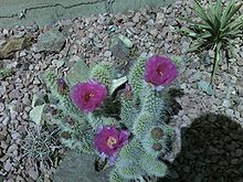 Xeriscaping - Wikipedia, the free encyclopedia