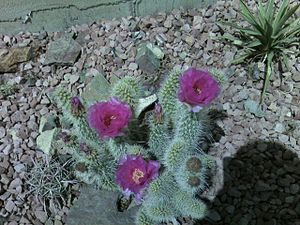 Xeriscaping Disadvantages | RM.