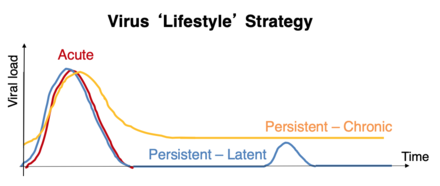 "A graph summarising the various virus ""lifestyle strategies, acute, chronic and latent"