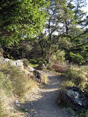 Mount Tamalpais State Park - Hiking trail in Mount Tamalpais State Park
