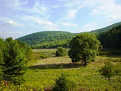 Nature Preserve, Binghamton University, Vestal, NY