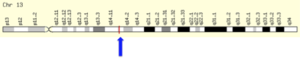 KIAA1704 - KIAA1704 chromosomal location