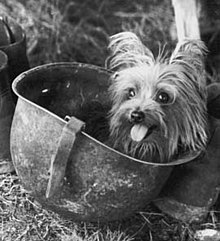 Smoky Dog Wikipedia