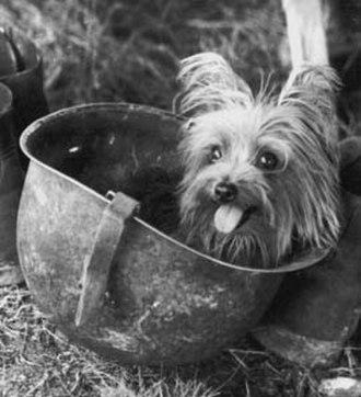 Smoky (dog) - Smoky in a helmet