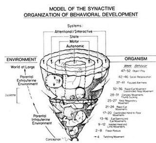 Synactive Theory of Newborn Behavioral Organization and Development