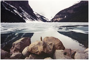 Lake Louise (Alberta) - Wildlife at Lake Louise