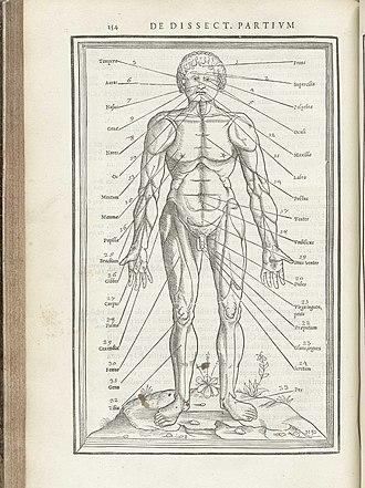 Charles Estienne - From Charles Estienne's De dissectione partium corporis humani libri tres (Paris, 1545).