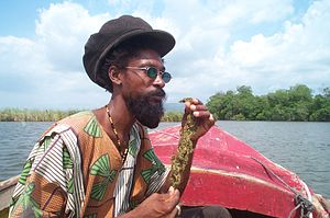 Cannabis culture - A Rasta man holding cannabis.