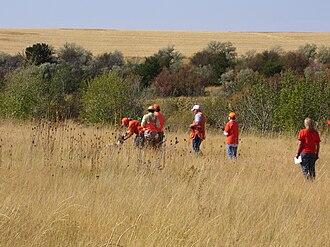 Field trial - A spaniel field trial