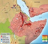 Положение и траектория движения оставшихся стаей саранчи на Африканском Роге и в Йемене, октябрь 2020 г.