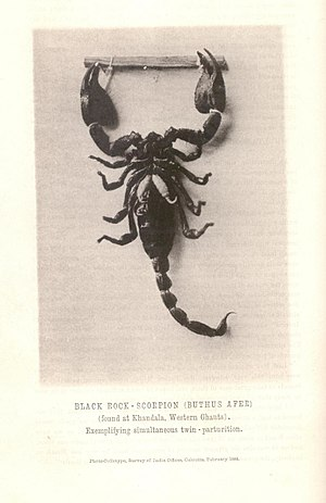 Journal of the Bombay Natural History Society - Image: First photograph JBNH Sa