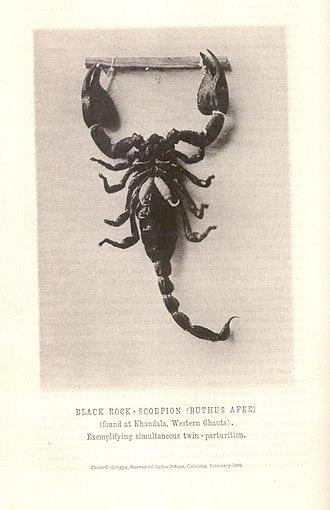 Journal of the Bombay Natural History Society - Image: First photograph JBNH Sa